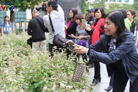 Thich thu ngam hoa tam giac mach Ha Giang giua long Ha Noi - Anh 12