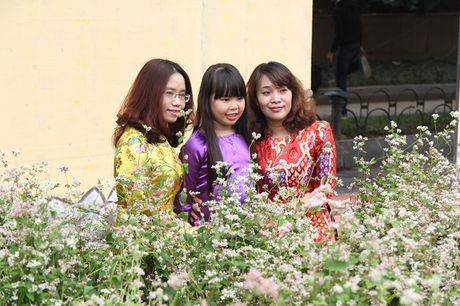 Thich thu ngam hoa tam giac mach Ha Giang giua long Ha Noi - Anh 1