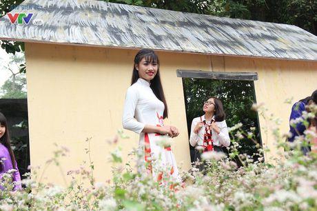 Thich thu ngam hoa tam giac mach Ha Giang giua long Ha Noi - Anh 4