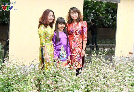 Thich thu ngam hoa tam giac mach Ha Giang giua long Ha Noi - Anh 5