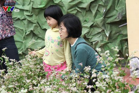 Thich thu ngam hoa tam giac mach Ha Giang giua long Ha Noi - Anh 9