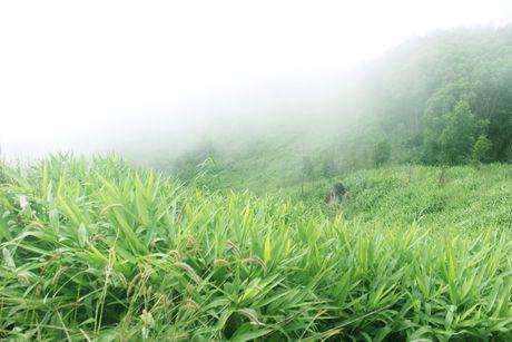 Tan huong cam giac 'phuot' den cung dinh nui Chua Chan - Anh 3