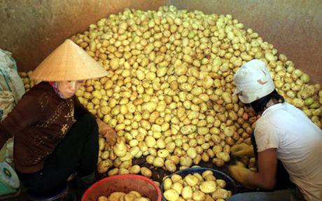 Nong san nhap khau thue suat 0%: Co hoi trong thach thuc - Anh 1