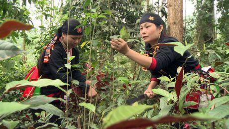 Phat trien cay duoc lieu: Huong di mang lai hieu qua cao - Anh 1