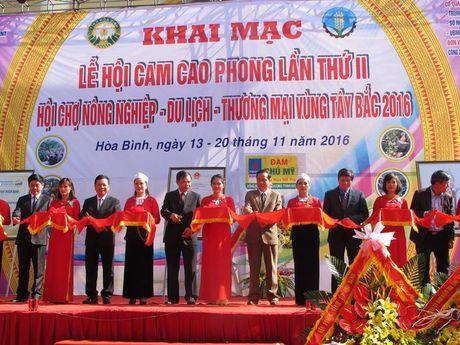 Le hoi Cam Cao Phong (Hoa Binh): Ngay khai hoi thu hon 600 tan - Anh 1
