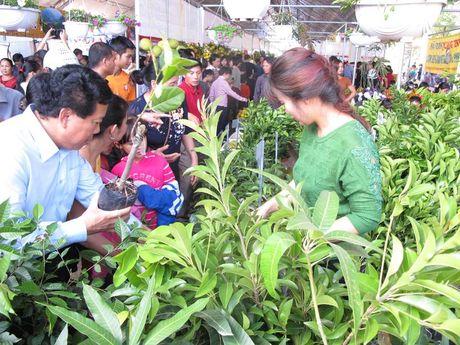 Le hoi Cam Cao Phong (Hoa Binh): Ngay khai hoi thu hon 600 tan - Anh 4