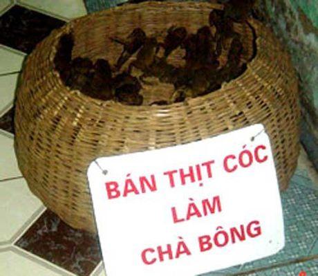 An thit coc, mat mang nhu choi! - Anh 1