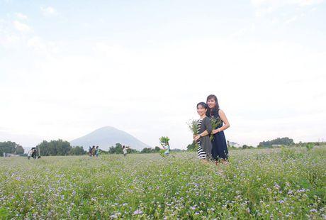 Bat ngo voi dong hoa dai giua long TP Tay Ninh - Anh 3