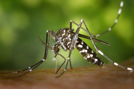Philippines ghi nhan them 10 truong hop moi nhiem virus Zika - Anh 1