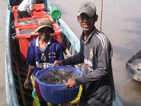 Thuong lai Trung Quoc lai pha nganh tom Viet Nam - Anh 1