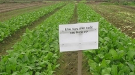 Nong nghiep huu co: Giai phap cho nong san thuc pham sach - Anh 1