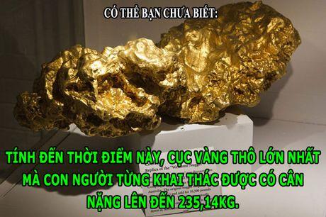 DOC-LA: Cuc vang nang nhat the gioi voi trong luong 235,14kg - Anh 1