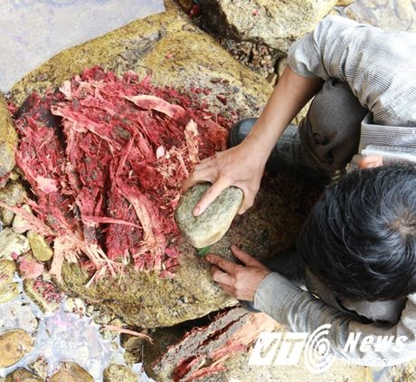 Hanh trinh san lung loai 'ca sam' ky la o lung chung troi Hoang Lien Son - Anh 2