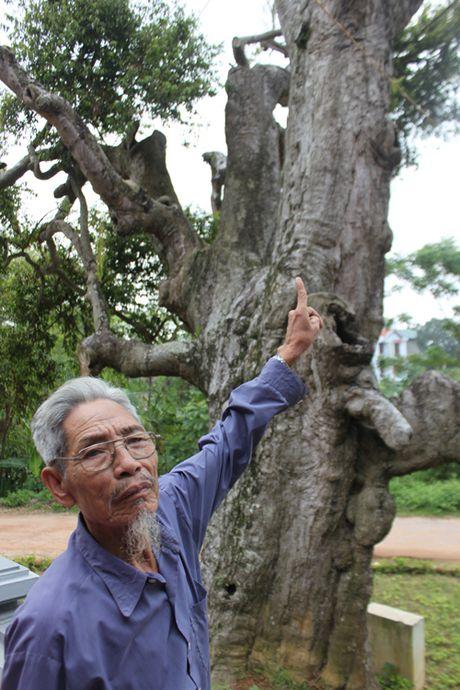 Chuyen ly ky o mieu tho su hoc co nhat Viet Nam - Anh 4