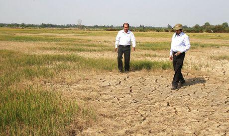 Can 25.000 ty dong giup nganh nong nghiep khac phuc hau qua cua El Nino - Anh 1