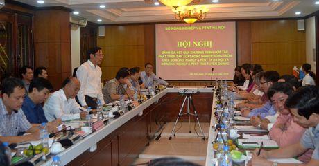Ha Noi ho tro Tuyen Quang tieu thu nong san - Anh 1