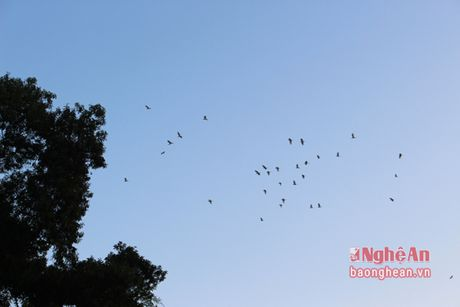 Vuon chim Khe Ho - noi tru ngu cua hang ngan chim troi - Anh 3