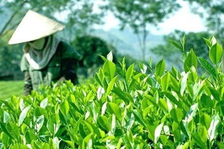 Vinatea: Phong vi Viet, tieu chuan quoc te - Anh 1