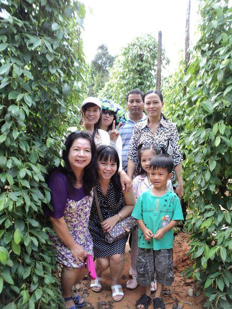 Tim huong phat trien ben vung nganh ho tieu Viet Nam - Anh 2