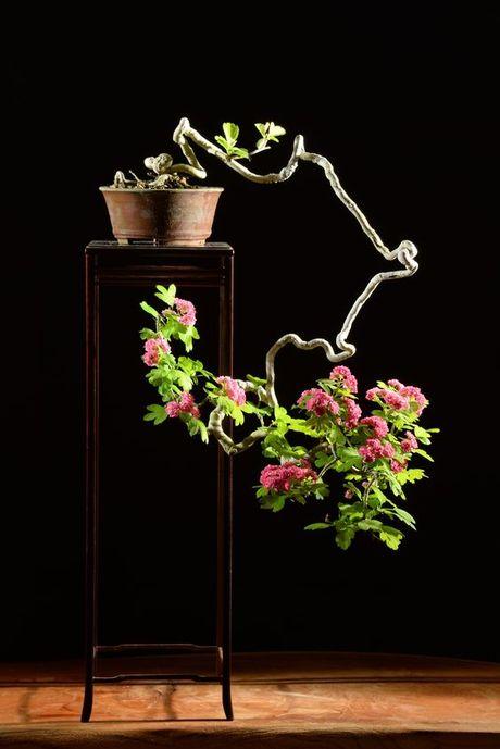 Dan choi me man nhung chau hoa bonsai the doc tuyet dep - Anh 11