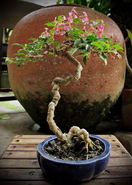 Dan choi me man nhung chau hoa bonsai the doc tuyet dep - Anh 3