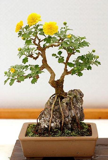 Dan choi me man nhung chau hoa bonsai the doc tuyet dep - Anh 4