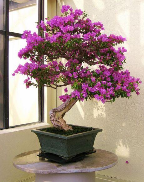 Dan choi me man nhung chau hoa bonsai the doc tuyet dep - Anh 5