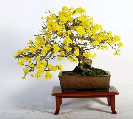 Dan choi me man nhung chau hoa bonsai the doc tuyet dep - Anh 6