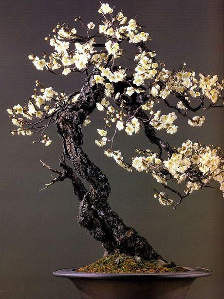 Dan choi me man nhung chau hoa bonsai the doc tuyet dep - Anh 7