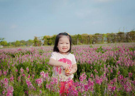 Me man canh dong hoa ngoc han dep ngat ngay giua long Ha Noi - Anh 5