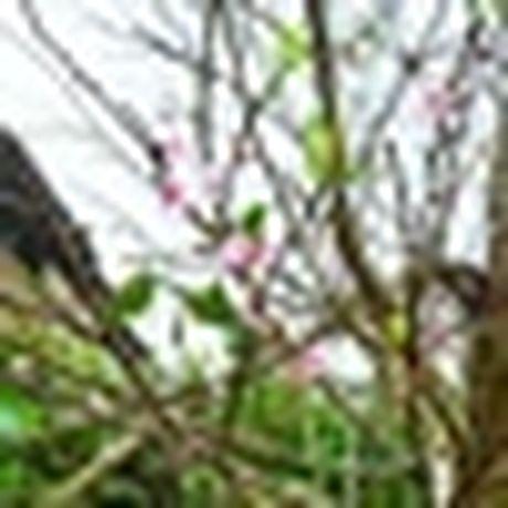 Ngu choi, ngam binh minh o Dong Chau - Thai Binh mua bien vang - Anh 10