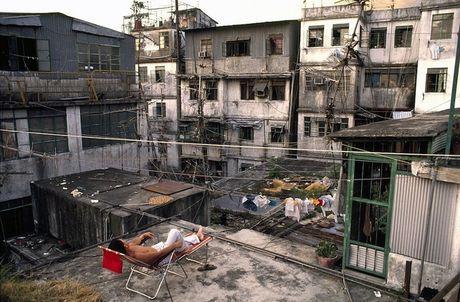 Khu o chuot day ray toi pham mot thoi o Hong Kong - Anh 3