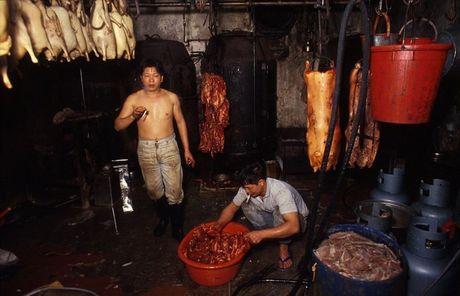Khu o chuot day ray toi pham mot thoi o Hong Kong - Anh 7