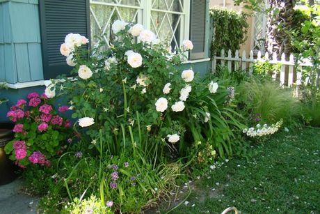 Ngoai that dep quyen ru nho trong hoa trang tri - Anh 4