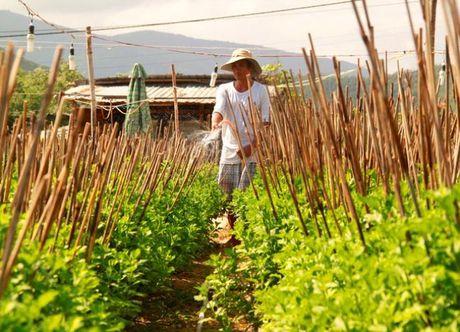 Binh Dinh: Thap thom mua hoa cuc Tet - Anh 3