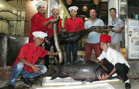 Toan dan biet ong Vu Huy Hoang sai pham, quoc te truy na do Trinh Xuan Thanh - Anh 2