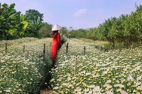 Thieu nu Ha Thanh no nuc chup anh vuon hoa cuc hoa mi - Anh 1
