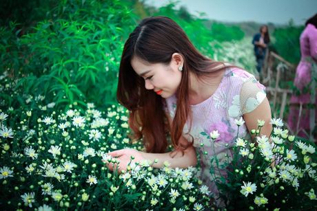 Thieu nu Ha Thanh no nuc chup anh vuon hoa cuc hoa mi - Anh 8