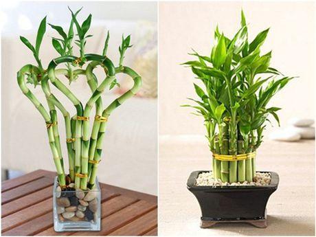 3 loai hoa mang phong thuy xau cho nha o phai tranh ngay - Anh 3