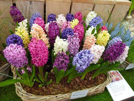 3 loai hoa mang phong thuy xau cho nha o phai tranh ngay - Anh 5