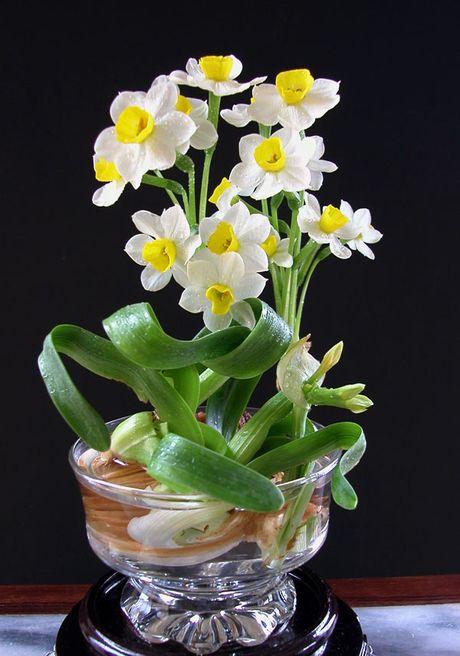 3 loai hoa mang phong thuy xau cho nha o phai tranh ngay - Anh 7