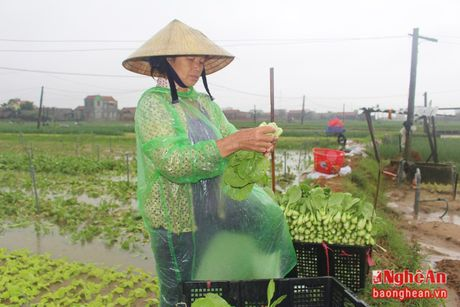 Huong di nao cho tieu thu san pham vu dong? - Anh 2