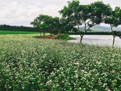 Nhung diem den dep 'rung tim' o Da Lat xuat hien trong MV moi cua Quang Vinh - Anh 4