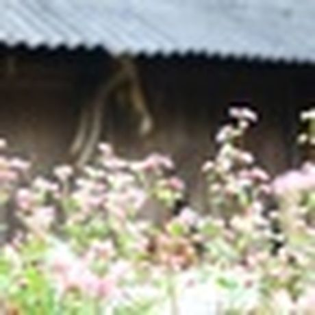 Cao nguyen da Ha Giang dep ki vi qua nhung thuoc hinh den trang - Anh 17