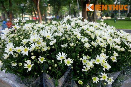 Pho phuong Ha Noi dep nao long mua cuc hoa mi - Anh 10