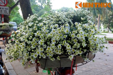 Pho phuong Ha Noi dep nao long mua cuc hoa mi - Anh 12