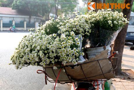 Pho phuong Ha Noi dep nao long mua cuc hoa mi - Anh 1