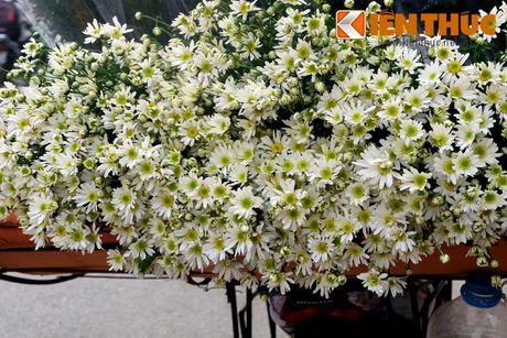 Pho phuong Ha Noi dep nao long mua cuc hoa mi - Anh 2