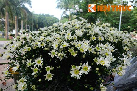 Pho phuong Ha Noi dep nao long mua cuc hoa mi - Anh 3