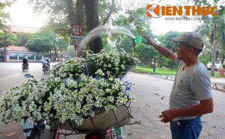Pho phuong Ha Noi dep nao long mua cuc hoa mi - Anh 4